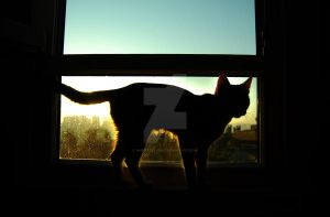 Silhouette of Cat by AhmetSelcuk