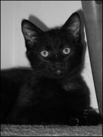 Portrait: Onyx by CandaceIsVampire