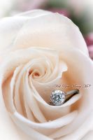 Will You Marry Me? by FDLphoto