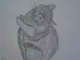 My sketched real life cat :P by SomethingWild7