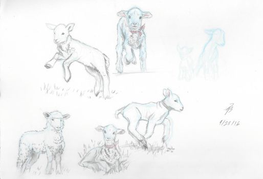 Sheep Study Sketches 2 by AngelBee23