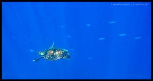 Green turtle 8 by Dominion-Photography