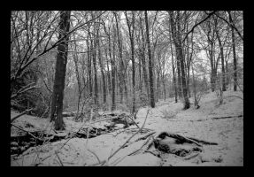 snow in the woods by damo3sp
