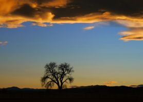 Lone Tree by PamplemousseCeil