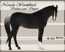 Nevada Wamrblood indian gene Import 01 by BRls-love-is-MY-Live