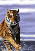 tiger on the beach by airgroove