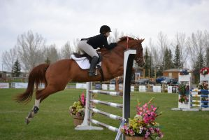 Show Jumping - 3 by Silver-Stock-Images