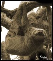 Sloth by kraeos