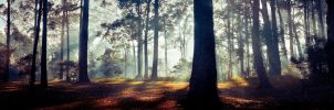 One foggy morning by andrewkevin