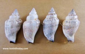 Sea Shell Hair Clips by Lost-in-the-day