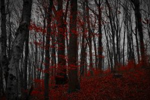 Red Black Forest by LillianEvill