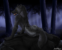 Midnight Wolf by sugarpoultry