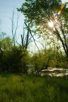 _obsessionwithlightandtrees4_ by CalenthrellII