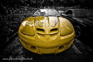 Yellow Trans Am by AmericanMuscle