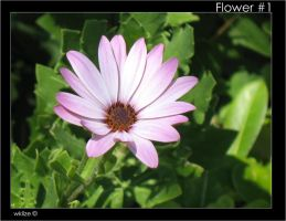 Flower-First Shot by WKLIZE