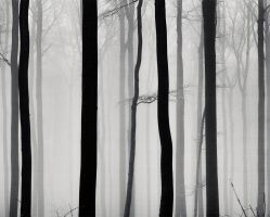 A Strip of Trees 01 by HorstSchmier