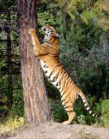 standing tall.very tall by Yair-Leibovich