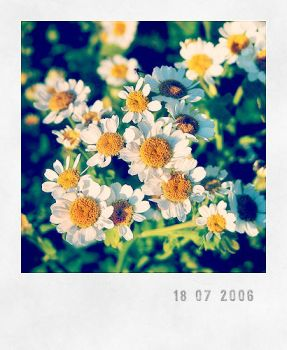 Camomile by unsweet