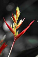 Bird of Paradise Flower by a6-k