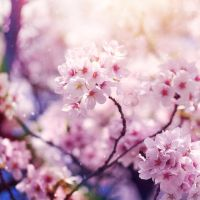 Blossom by EliseEnchanted