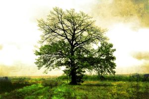 Half of a tree green by paFci0