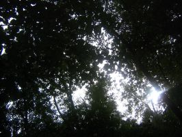 forest canopy. ciaroscuro by CotyStock