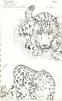 Snow Leopards3 by Imaginary-Shadow