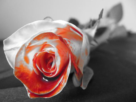 The Inky Rose by SandallPhotography