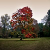 autumn is comming II by mitlichtmaler