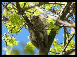 Resting Squirrel by melkatsa