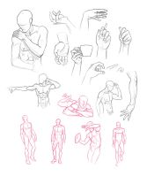 Anatomy Studies by Adreean