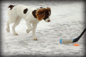 Hockey Dog by UffdaGreg