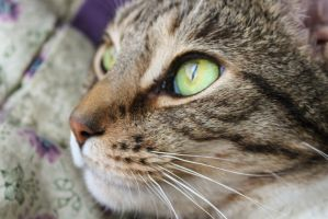 Cat's Eye by lily5lace