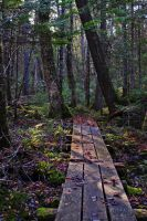 forest path 2 by LucieG-Stock