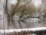 Trees in the cold water by Daeumeline