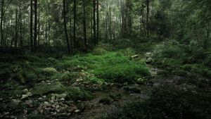 Wallpaper - Forest by Soniop