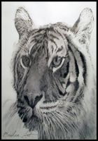 A2 Charcoal Tiger by BrokenArt-UK