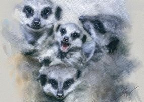 MEERKATS WATERCOLOUR by JALpix