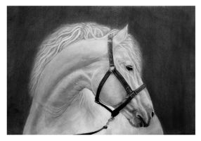 White Horse #Hyperrealism by StefanMarcuArt