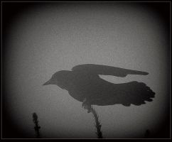 Silhouette of a Raven by surrealistic-gloom