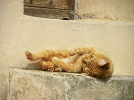 Serenita del gatto 5 by Flore-stock