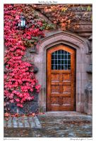 Red Ivy by the Door by yellowcaseartist