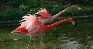 Streched Flamingos by RMEdwards