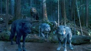 Wolf pack by amazinglife2011