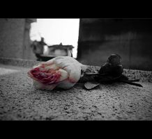 .The funeral of hearts by tgphotographer