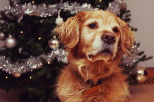 christmas dog by anouklemson