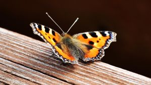 orange butterfly by my-little-photoworld