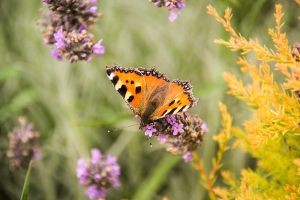 134. butterfly IV by littleconfusion