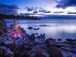 East Shore Christmas tree131219-81 by MartinGollery