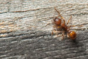 An Ant by gmwebs